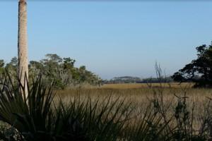 Wetlands: Nature's Nurseries