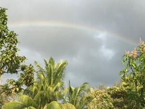 Rainbow in Miami